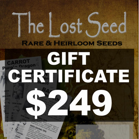 Gift Certificate $249