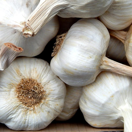 ITALIAN WHITE (Garlic)