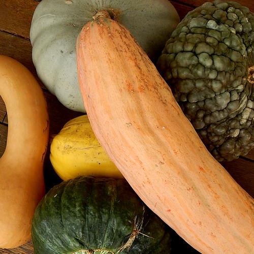 HEIRLOOM MIX (Pumpkin)