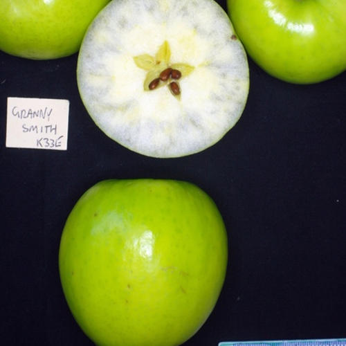 GRANNY SMITH (Scion)