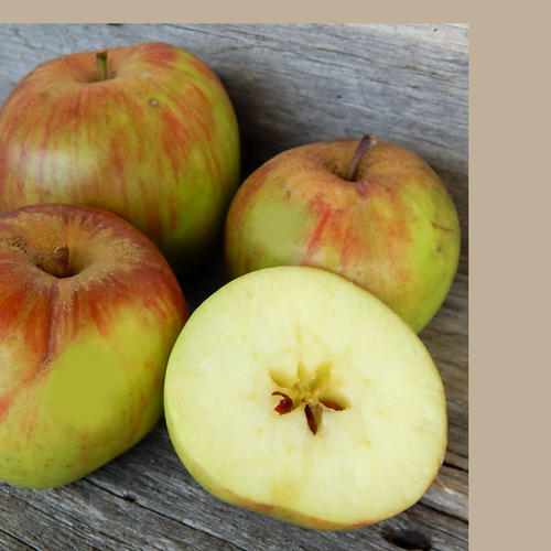 STAYMAN'S WINESAP (Scion)